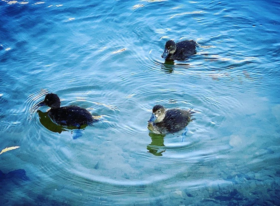🦆 Wildlife Wednesday 🦆