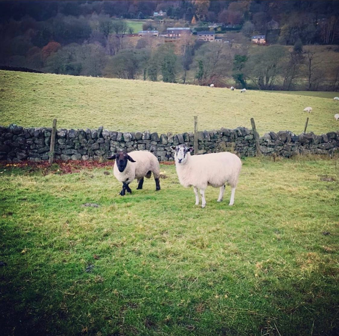 🐑 Wildlife Wednesday 🐑  We love seeing all kinds of four legged friends out and about, they're ju...