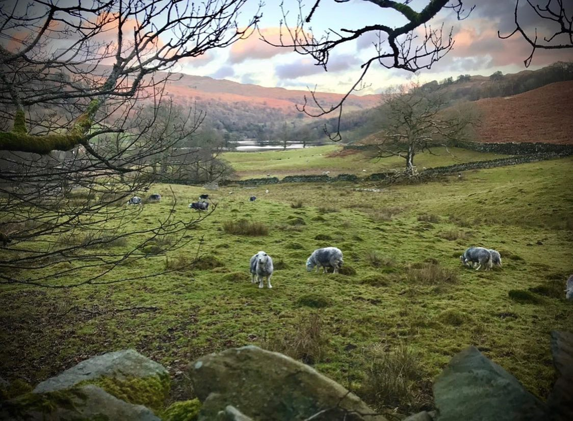 🐏 Wildlife Wednesday 🐏  The Peak District Challenge is taking place in September, registrations r...