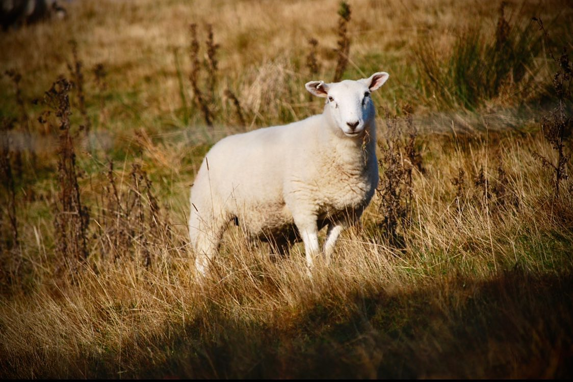 🐏 Wildlife Wednesday 🐏  The Peak District Challenge entires close on 17th August… register now at...